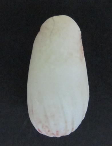 異常卵(いじょうらん)
