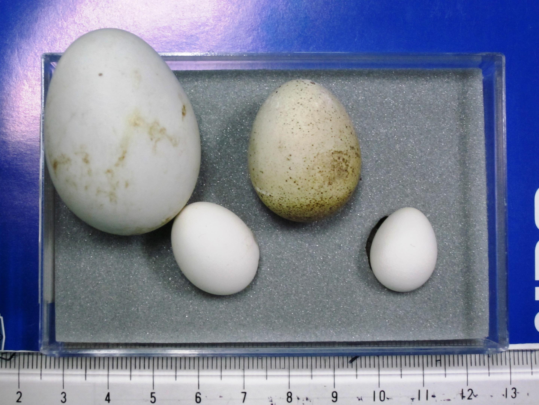 卵(たまご)