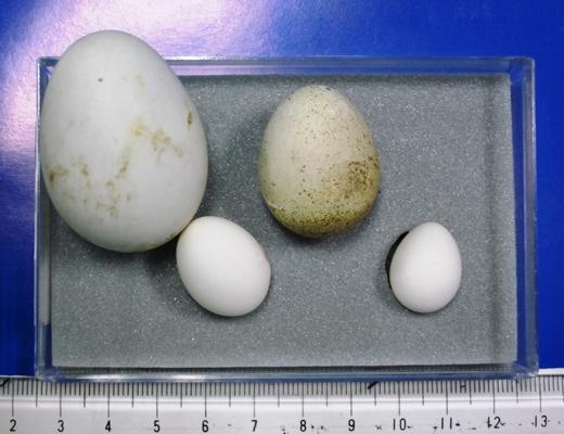 卵の異常のイメージ01