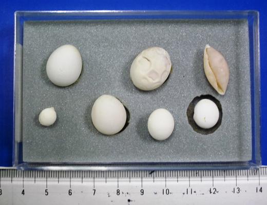 卵の異常のイメージ02