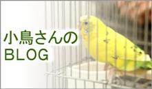 小鳥の病気BLOG
